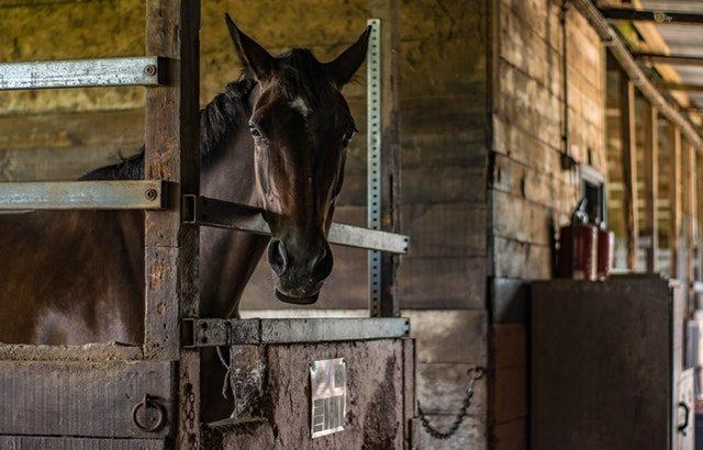 どこで習う?乗馬のスクールは色々