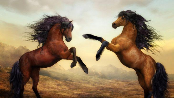 【夏休み】リゾートで乗馬体験がオススメです