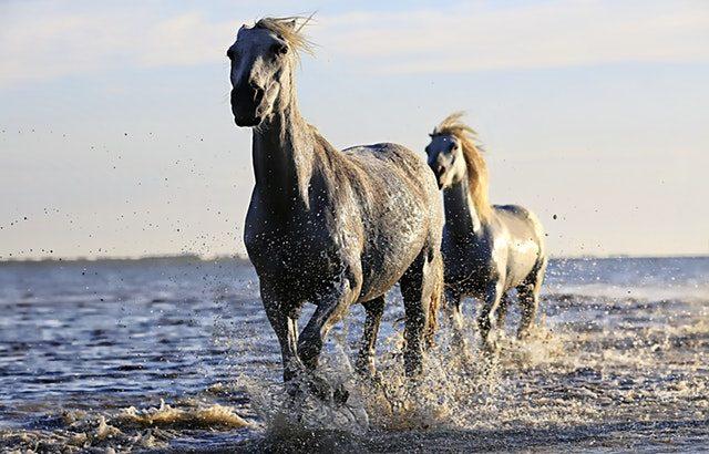 乗馬〜その魅力とは?