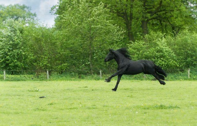乗馬を習ってみたいが長続きするか不安という人へ