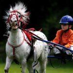 乗馬を習う際一番最初にする練習は何か?