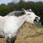 乗馬を習う際、一般的な一日の流れ