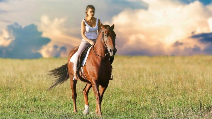 自馬を持つのは大変なのか?大金がかかるのか?