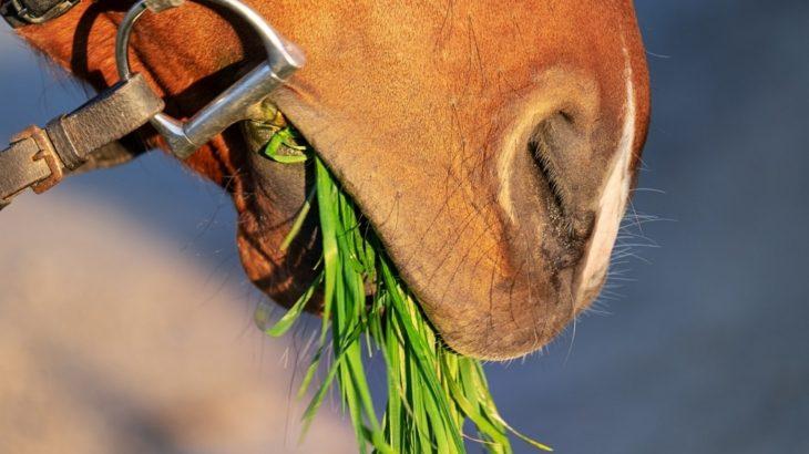 ポケットに潜ませろ!馬にちょいあげるオヤツのおすすめ