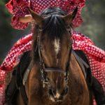 子供に乗馬を習わせるメリット