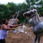 愛馬に対するブラッシングの効果について